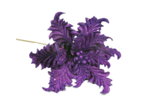 PURPLE VELVET ACANTHUS FLOWER (12)
