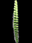 30CML GREEN SPIRAL HANGER (6)
