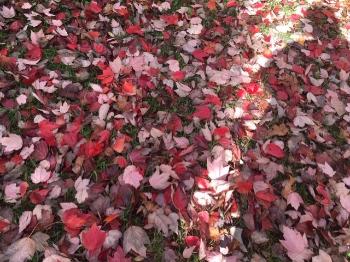 thumbnail Leaves-474