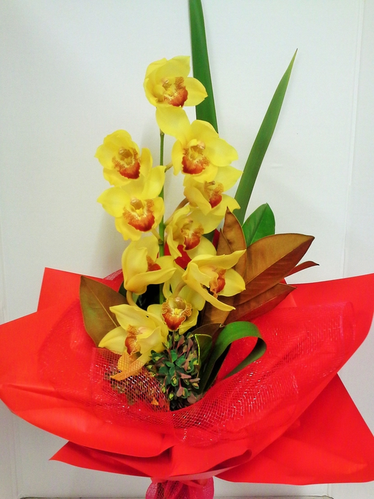 Blooming Orchid Stem