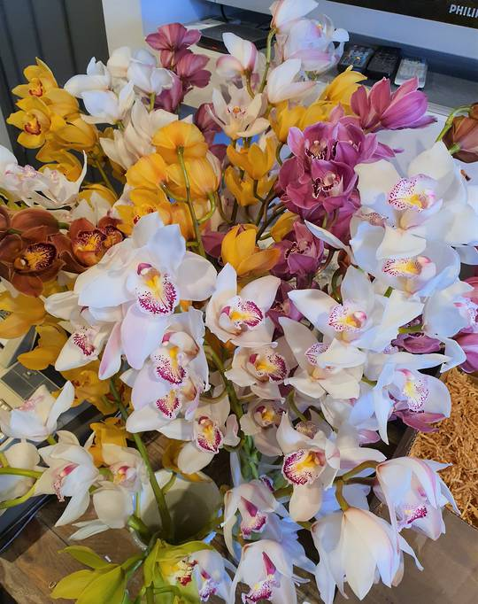 Orchid special  Friday the 24th September