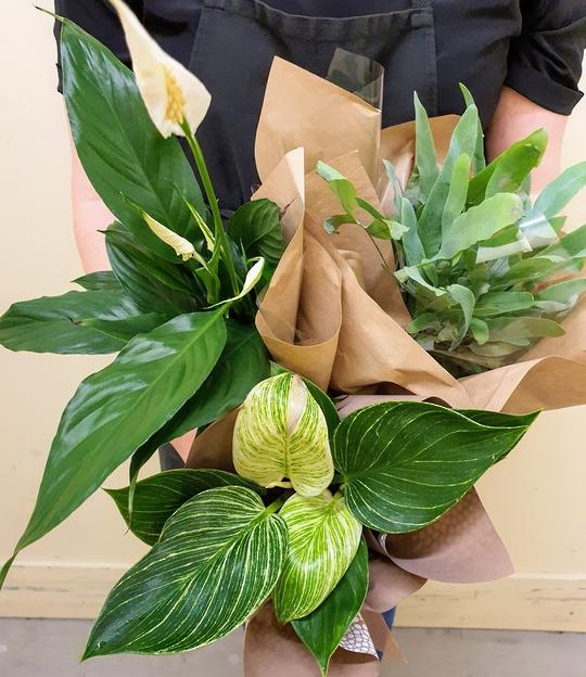 Living Green Plants