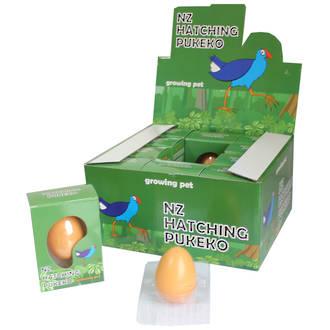 Hatching Pukeko In Egg Display