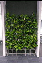 Ambius green wall