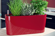 TCC Windowslill planter-271