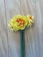 Double Daffodils 2 BUNCH for $5