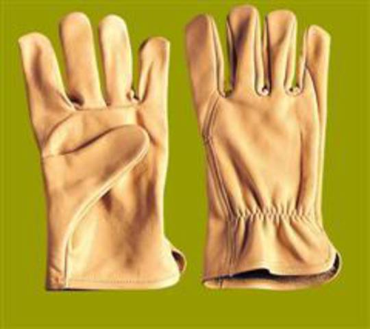 HSE Beige Drivers Glove