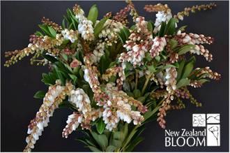Pieris White flowering