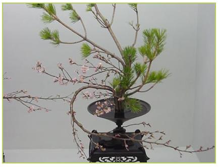 Ikebana6