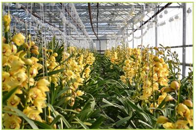 growers 10-852