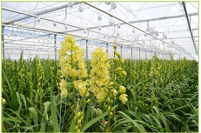 growers 11-350
