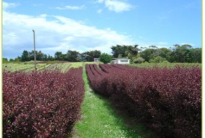 growers 15-366