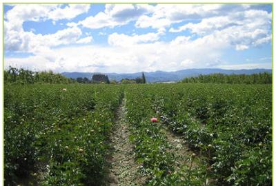 growers 16-915