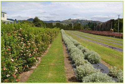 growers 17-945