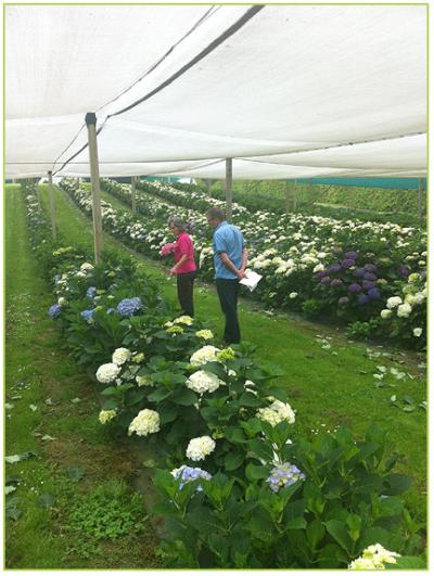 growers 19-242