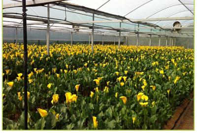 growers 2-642
