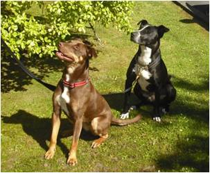 NZ Detector Dogs Keta and Zara
