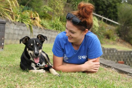 Rescue dog buddy preparing to join the NZ Detector Dogs for training as a drug dog
