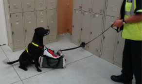 NZ Detector Dogs Luke indicating on bag during training exercise