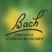 logo_Bach.jpg
