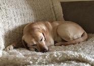 Image of Amber sleeping