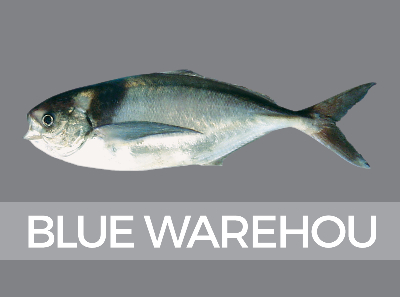 bluewarehou-species-id