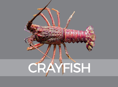 crayfish-species-id