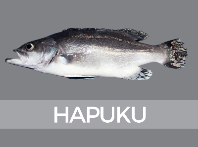 hapuku-species-id