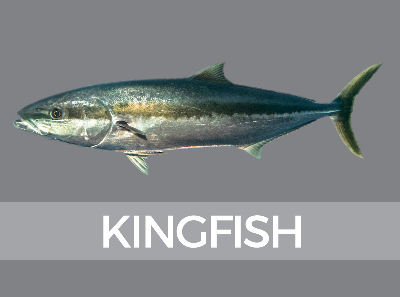 kingfish-species-id