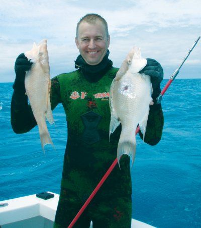 Spearfishing_hogfish.jpg