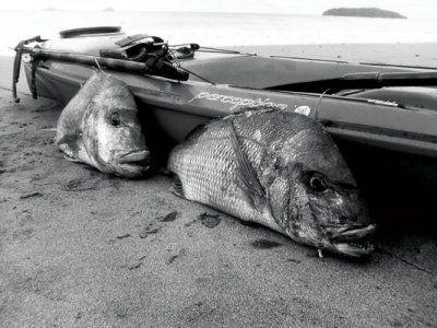 Speafishing_Snapper_from_a_yak.jpg