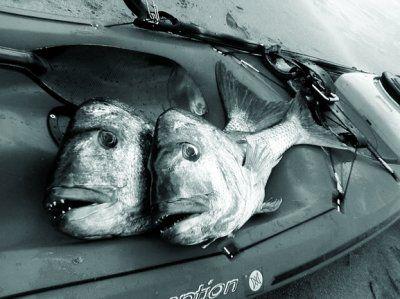 spearfishing_snapper.jpg