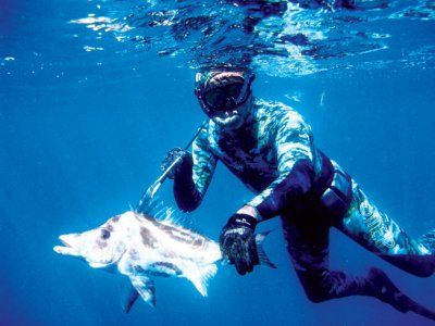 Spearfishing_giant_boarfish1.jpg