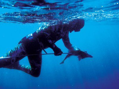 Spearfishing_giant_boarfish2.jpg