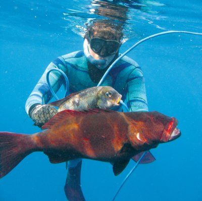 spearfishing_coral_trout.jpg
