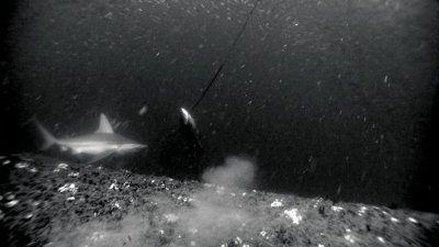 spearfishing_on_a_shipwreck.jpg