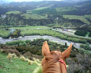 Natural Horsemanship and Treks