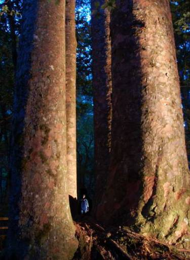 Footprints Waipoua