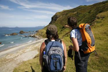 Bream Head Coast Walks
