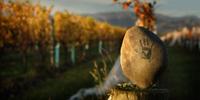 Serensin-Organic-Wine-Producer-Organic-Explorer2