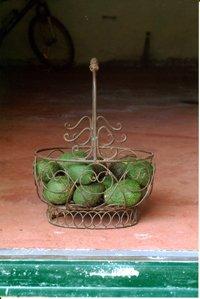 avocado_1.jpg