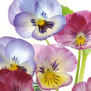 Lunch Paper Napkin Pansies