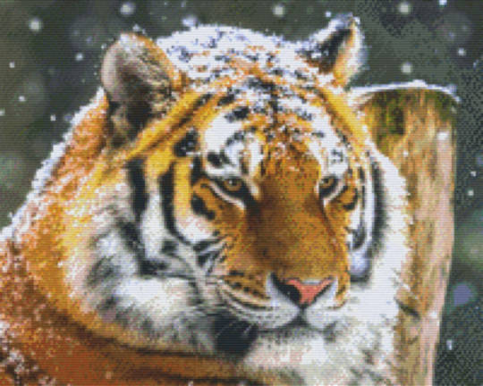 Tiger In The Snow Sixteen [16] Baseplate PixelHobby Mini-mosaic Art Kit