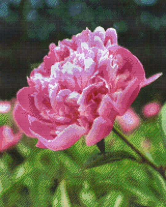 Rose Sixteen [16] Baseplate PixelHobby Mini- mosaic Art Kit