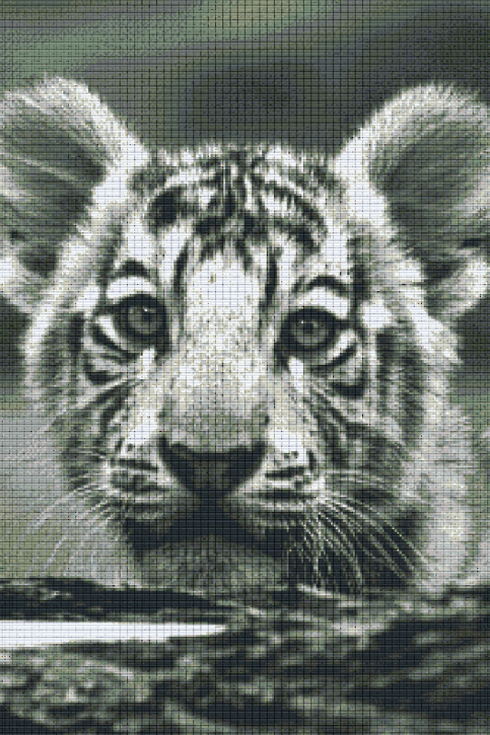 Baby Tiger Thirty [30] Baseplate PixelHobby Mini-mosaic Art Kits
