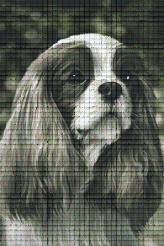Cavalier King Charles Spaniel Thirty [30] Baseplate PixelHobby Mini-mosaic Art Kits