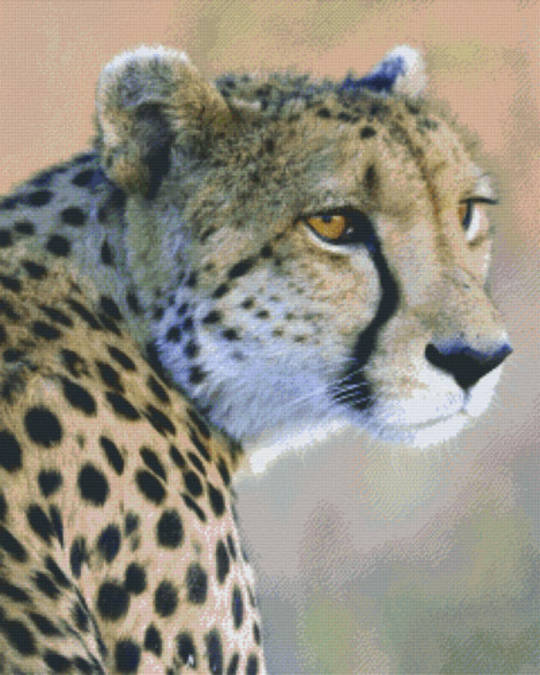 Cheetah Thirty Six [36] Baseplate PixelHobby Mini-mosaic Art Kits