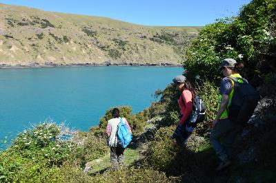 Surveying of LIttle penguin - Pohatu penguin