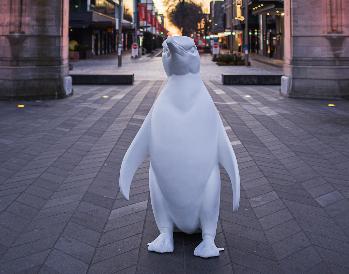 Pop up penguin akaroa