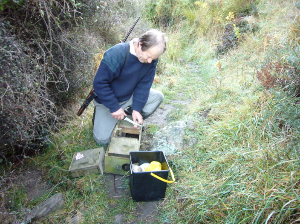 Setting a predator trap with fresh meat